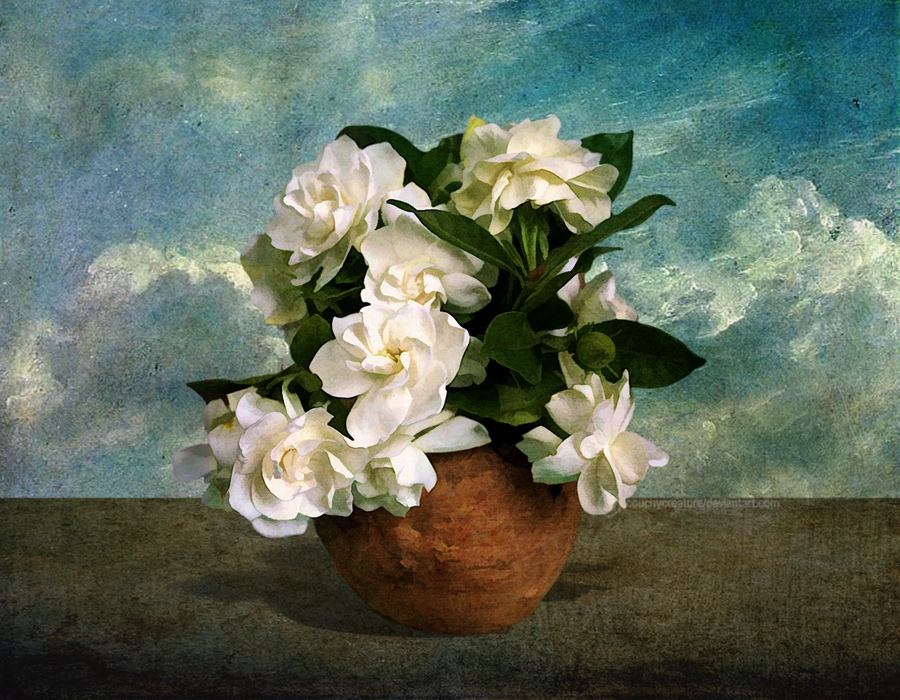 White flowers in a vase by CouchyCreature