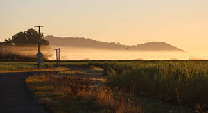 Morning mist on the canefields