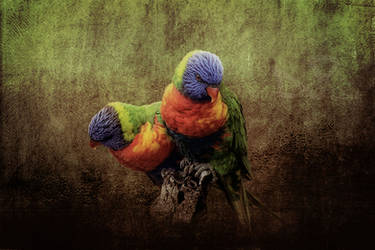 Birds in paradise - Lorikeets