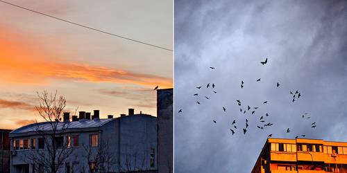 birds these days by zvzmng