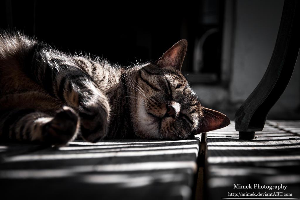 Cat Nap - Buddy Outside