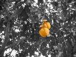 Fruits Of Hard Labor