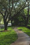 Irma's Path
