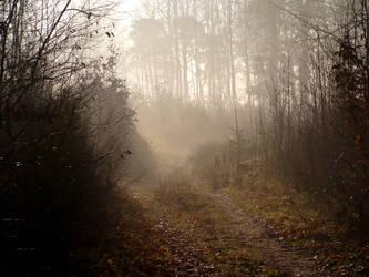 Foggy morning by Navratin