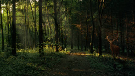 Enchanted Forest by Navratin