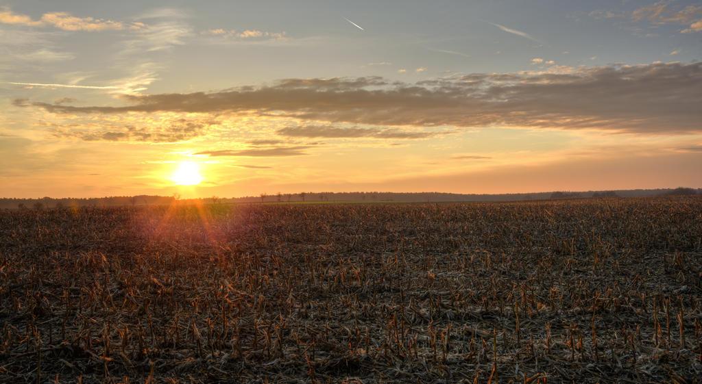 Sunset by Navratin