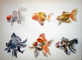 Goldfish by ASD92