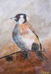 Sticlete - Goldfinch (Carduelis carduelis)