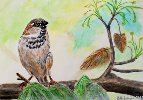 Vrabie - Sparrow (Passer domesticus)