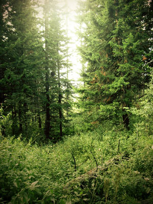 forest by ForestGirlStock
