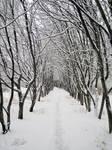 winter26