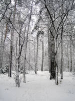 winter32 by ForestGirlStock