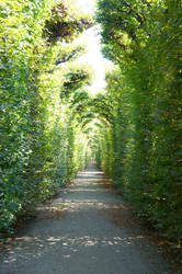green path02 by ForestGirlStock