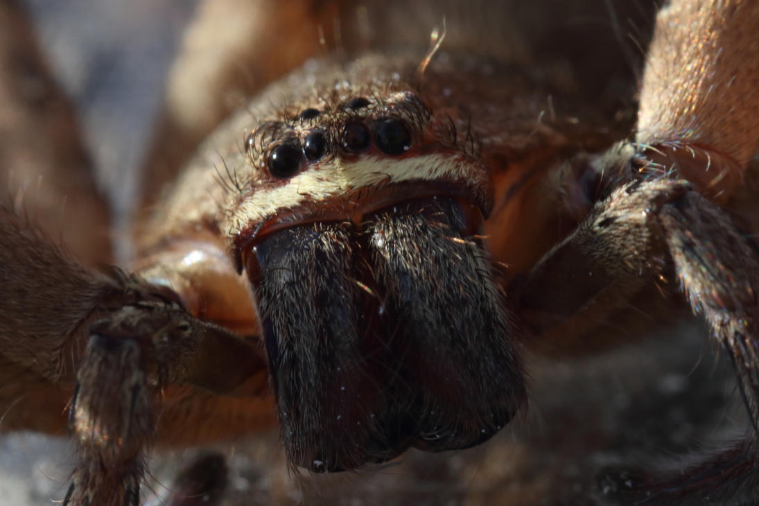 Spider Macro Straight Ahead by osx-mkx