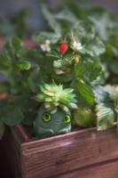 OOAK art toy Baby Succulent Spirit by Furrykami-creatures