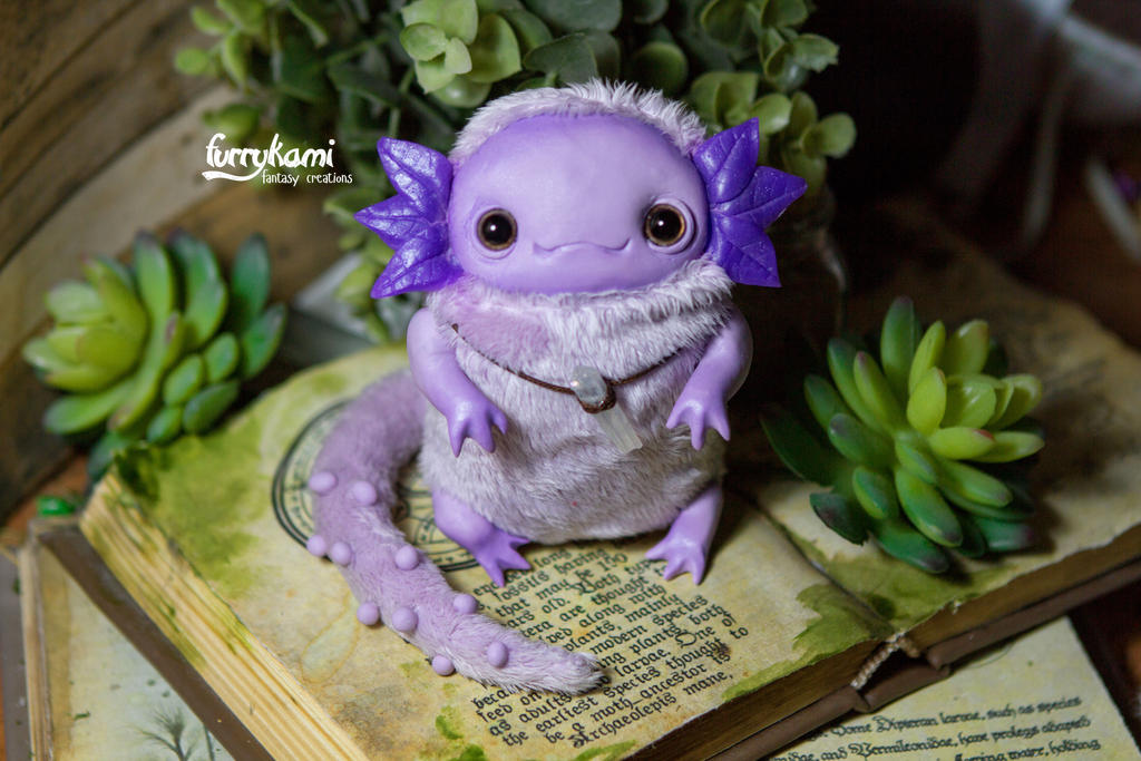 Purple axolotl