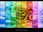 Rose Rainbow by tigerelune