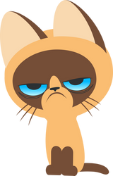 Kitten named Grumpy by UP1TER