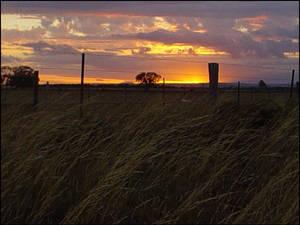 Wheatfield Sunscape