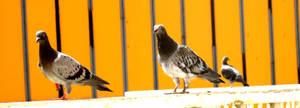 What lovley birds.