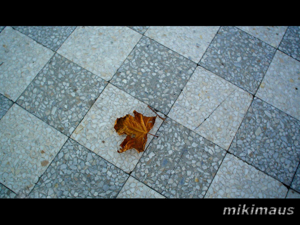 MikiMaus's Profile Picture