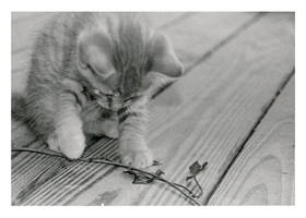 Kitten by egad
