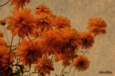 A few flowers by wiwaldi24