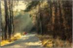 Walk through the woods
