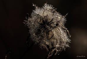 Artificial dew by wiwaldi24