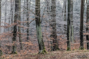 In winter without snow by wiwaldi24