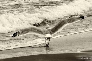 Walk along the banks of the Baltic Sea - photo 1 by wiwaldi24