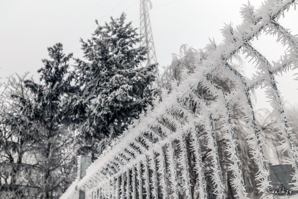 Needle frost. by wiwaldi24
