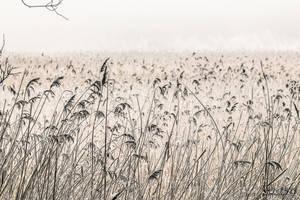 Bird Paradise - Sobieszewska Island _10 by wiwaldi24