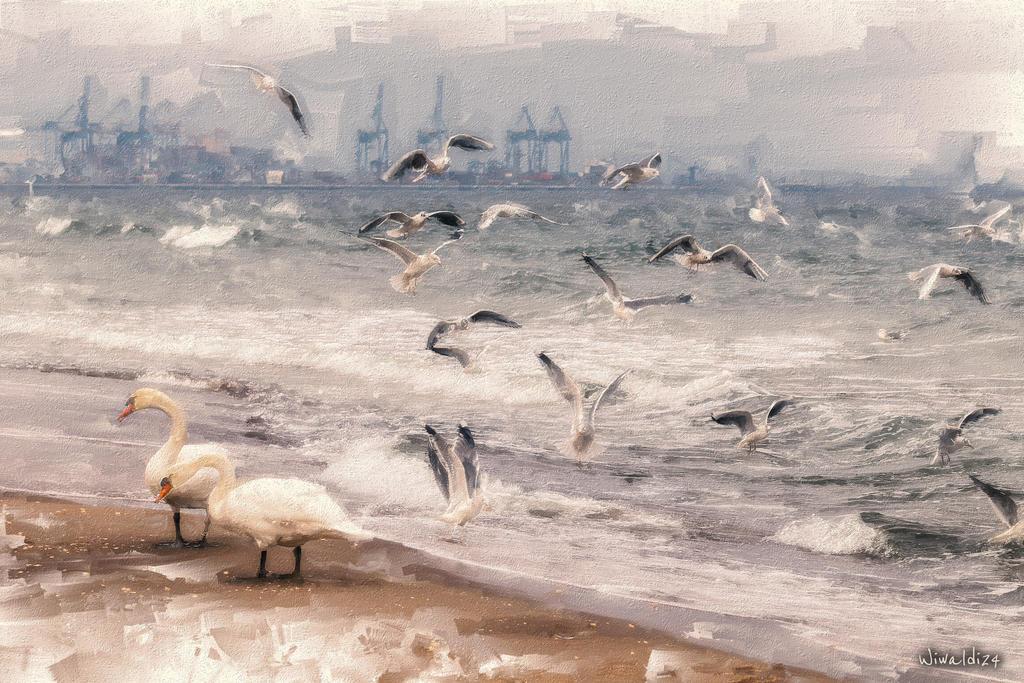 Seagulls by wiwaldi24