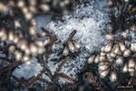 Needles of ice