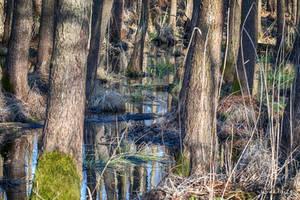 The Swamp by wiwaldi24