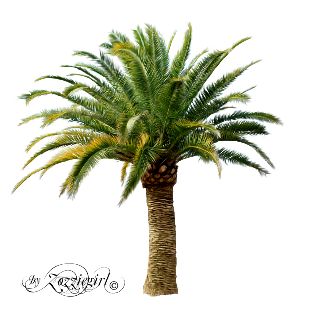 Palm treepng by Zozziegirl on DeviantArt