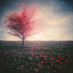 Tree in a field of red flowers