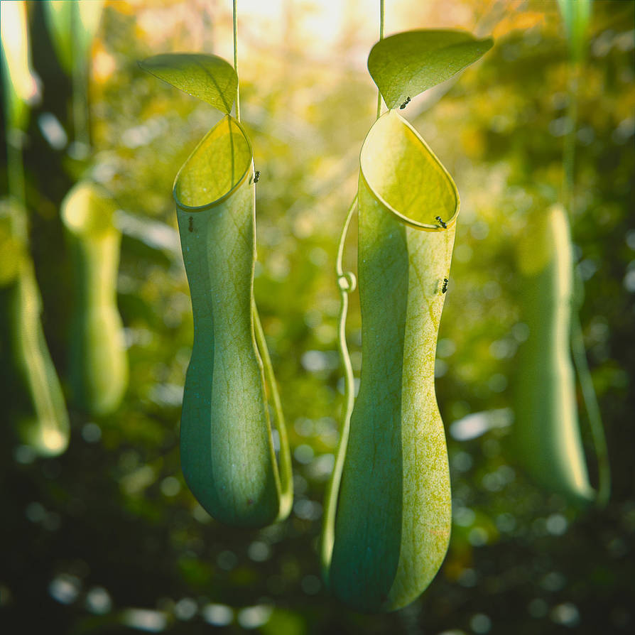 Nepenthes by IkyuValiantValentine