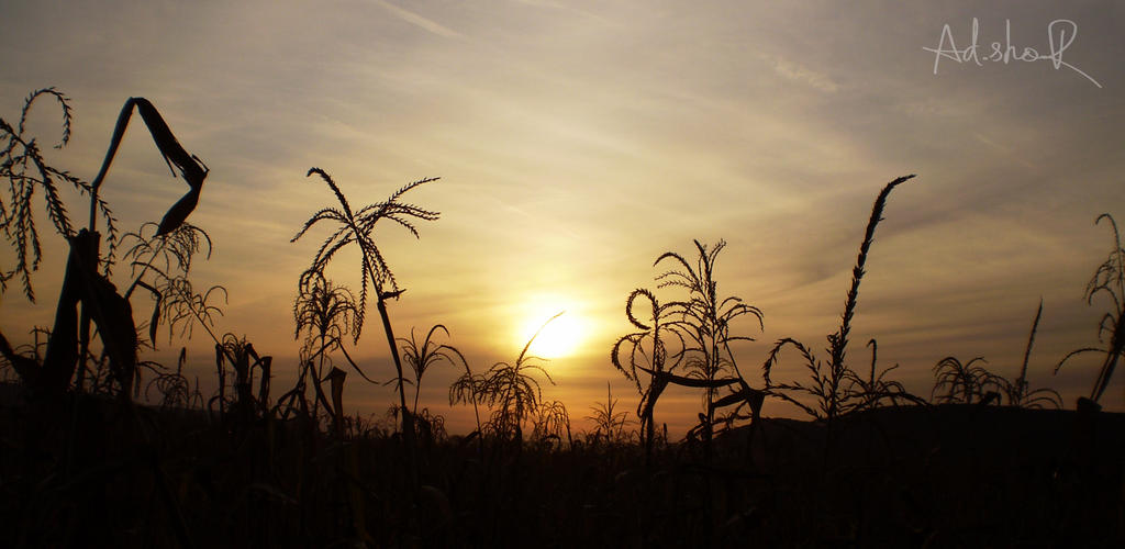 Beyond the corn by ad-shor