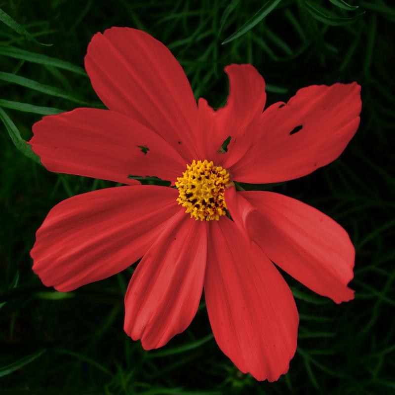 War Torn - Flower by cork279