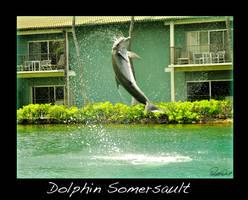 Dolphin Somersault