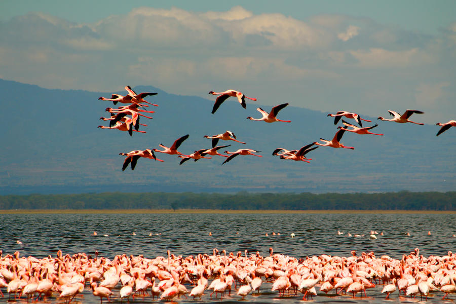 flying flamingoes ii by -#main