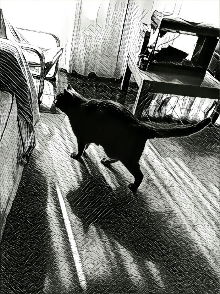 Prisma Cat 20170302 by pgibe