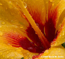 inside a flower in the rain by Dancing-Treefrog