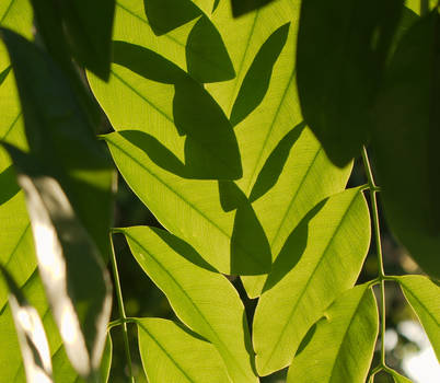 Bug shadow on leaves?