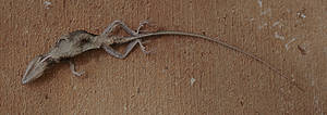 Death at my doorstep by Dancing-Treefrog