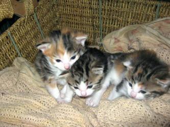 Kittens by Booky-TrueIdentities