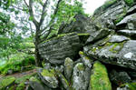 Stone and moss