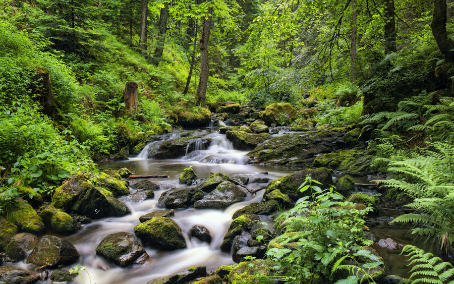 Black Forest River II by NYClaudioTesta